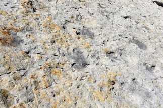 SB2015 - Dinosaur Ridge foot prints
